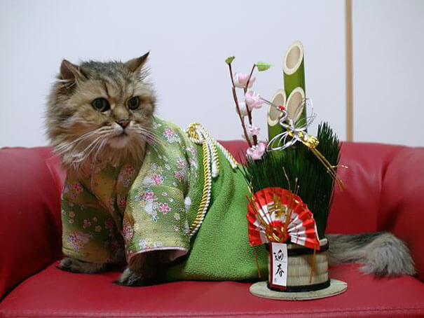 cat japanese outfit 6 (1)