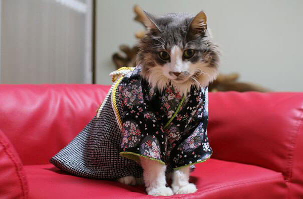 cat japanese outfit 7 (1)