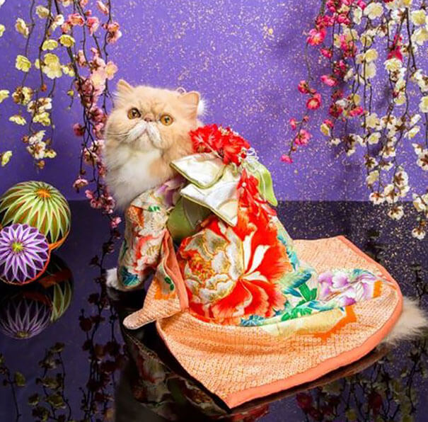 cat japanese outfit 8 (1)
