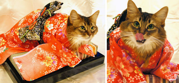 cat japanese outfit 9 (1)