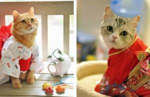 cat kimono feat (1)