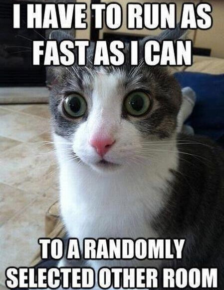 cat memes 1 1 literally 51 cat memes to take over your screen and day