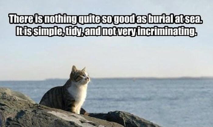 cat pics 10 (1)