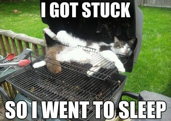 cat jokes 14 (1)