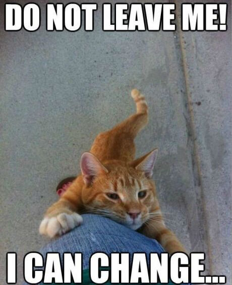 cat jokes 16 (1)