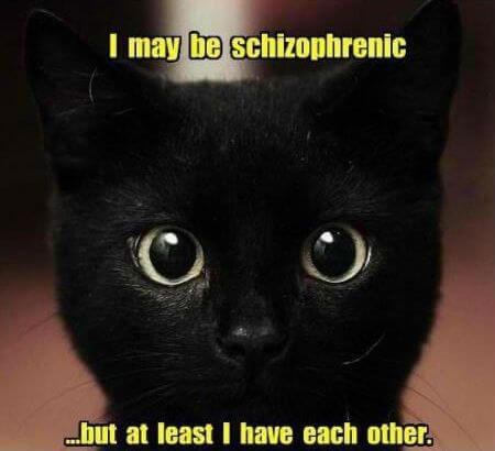 cat jokes 17 (1)