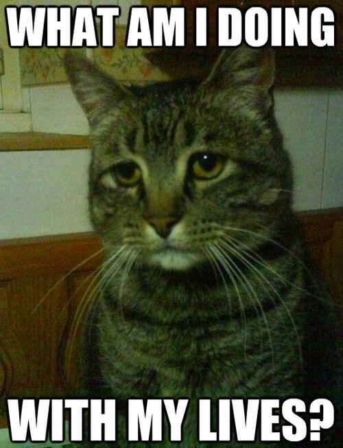cat jokes 18 (1)