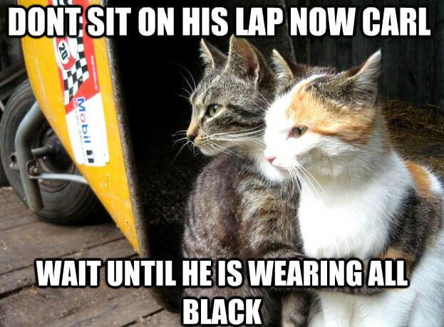 cat jokes 19 (1)