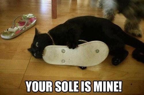 cat jokes 20 (1)