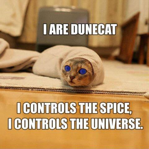 cat jokes 21 (1)