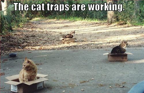 cat jokes 22 (1)