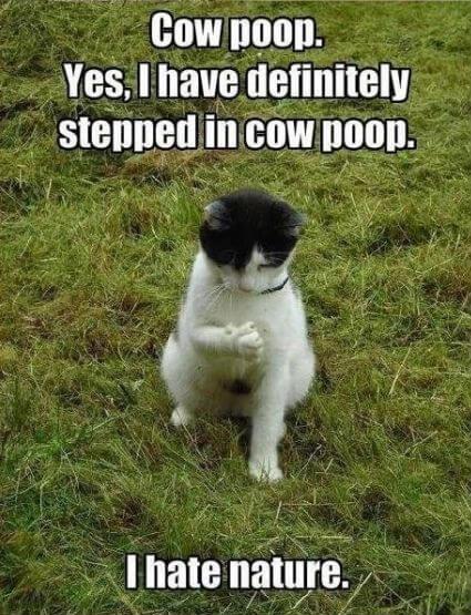 cat jokes 23 (1)