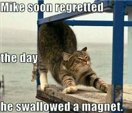 cat jokes 24 (1)