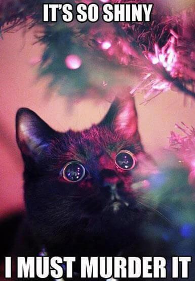 cat jokes 25 (1)