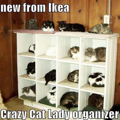 cat fun images 26 (1)