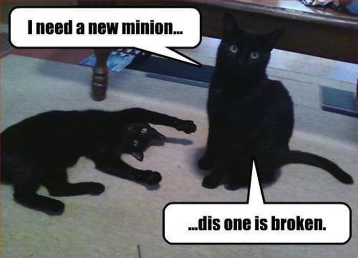 cat fun images 29 (1)