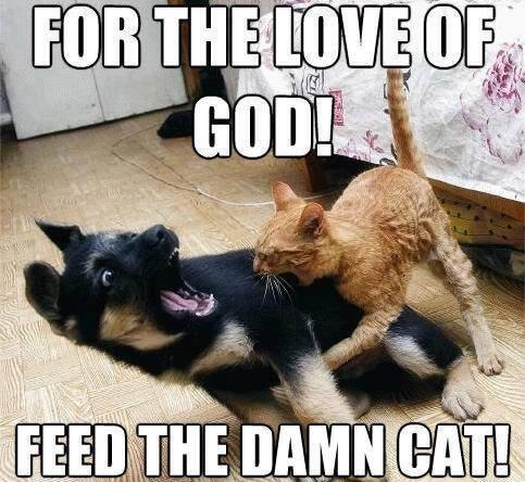 cat fun images 31 (1)