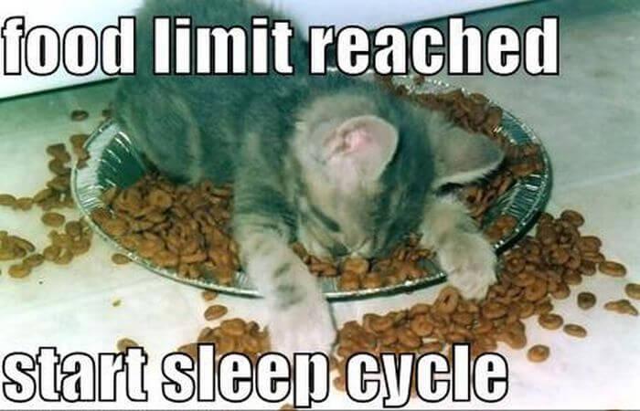 cat fun images 33 (1)