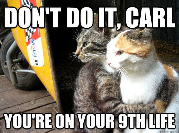cat images 39 (1)