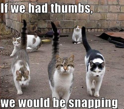 cat pics 4 (1)