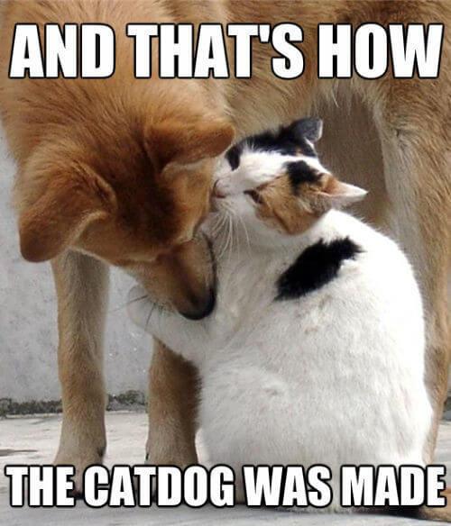 cat images 42 (1)