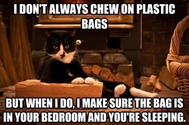 cat memes 51 (1)