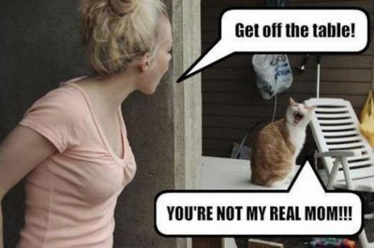 cat pics 7 (1)
