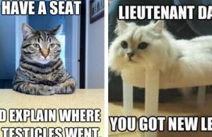 cat memes feat (1)