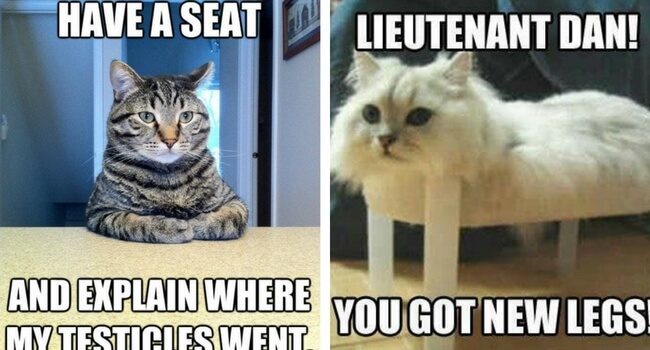 Leg Day Meme Cat