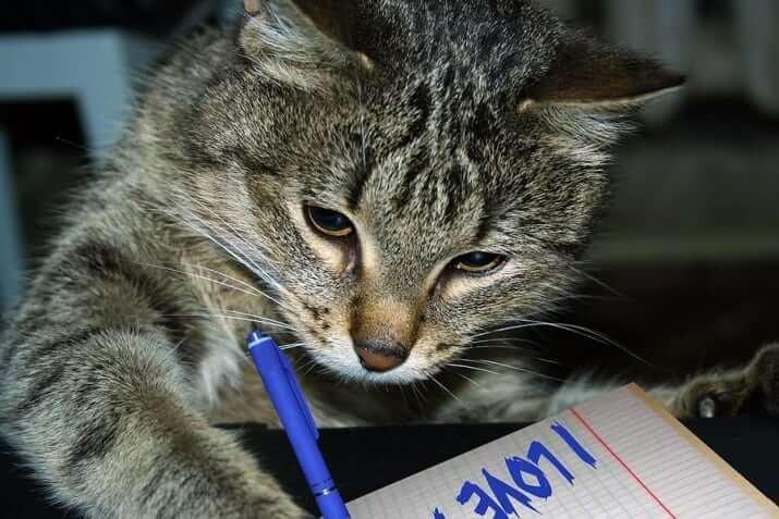 cat pics 11 (1)