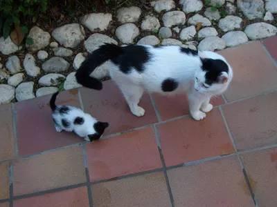kitten puns 14 (1)