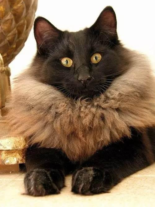 cat pics 5 (1)