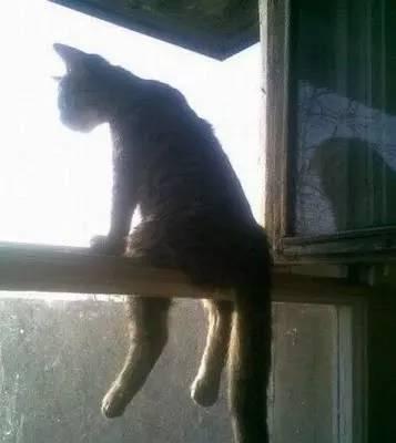 cat pics 6 (1)