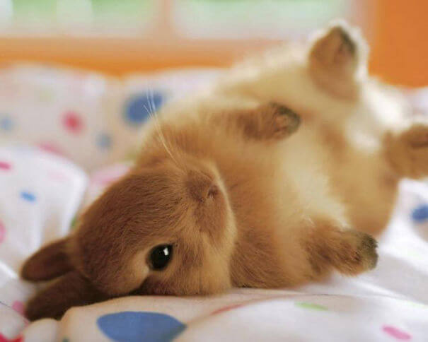 adorable bunnies 10