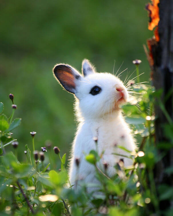 adorable bunnies 12