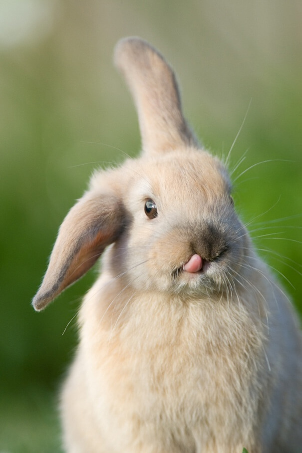 adorable bunnies 15