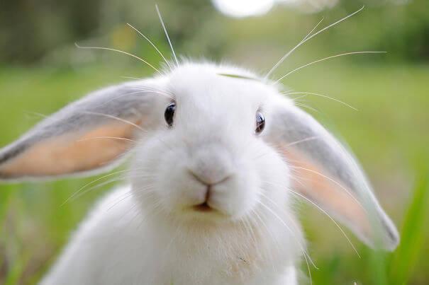 pet bunnies 19