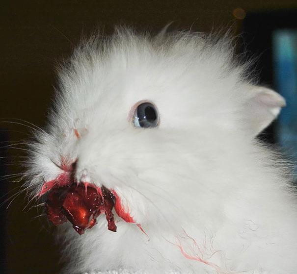 pet bunnies 20