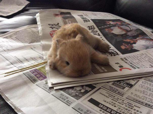 pet bunnies 21