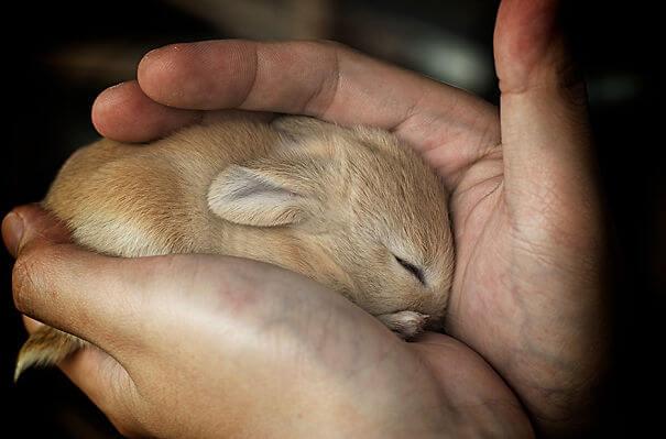 pet bunnies 23
