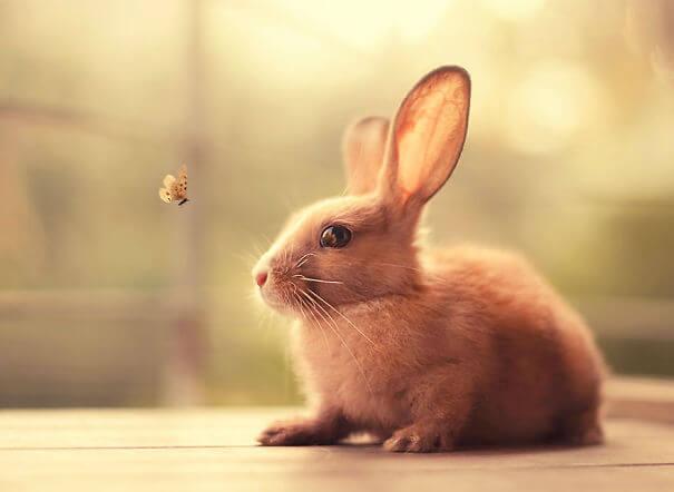 pet bunnies 24