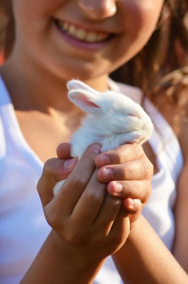 sweet bunnies 25