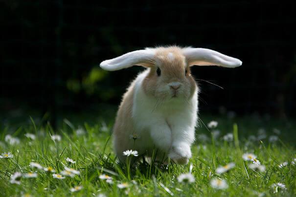 sweet bunnies 26