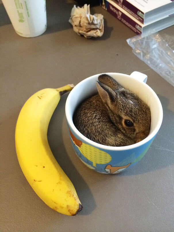 sweet bunnies 27