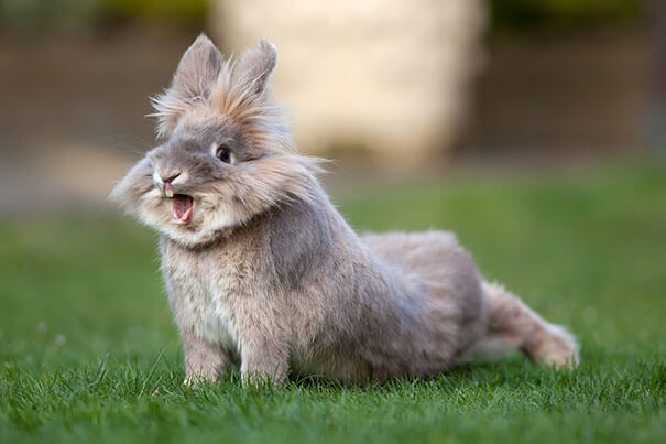 sweet bunnies 28