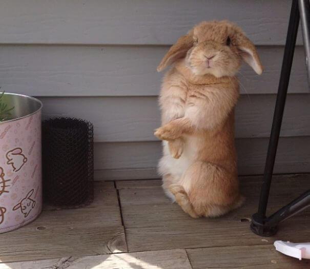 sweet bunnies 31