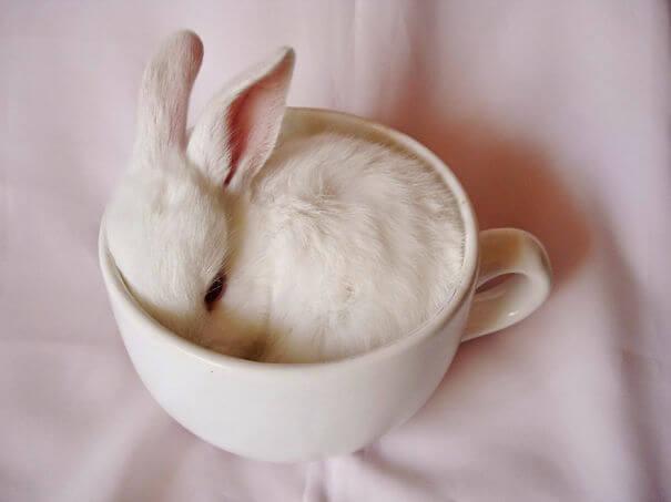 aww bunnies 33