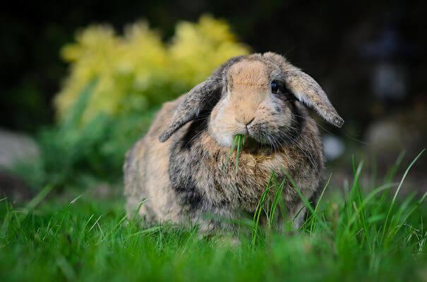 aww bunnies 34