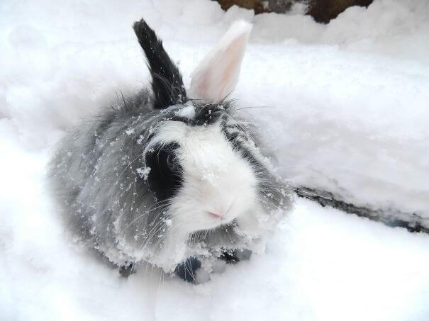 aww bunnies 35