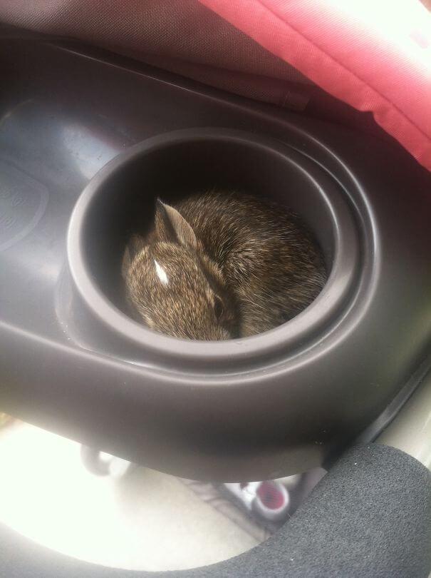 aww bunnies 37